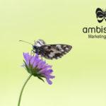 La mariposa de la franquicia Ambiseint llega a Cádiz y Tenerife