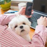 Mascotas para incrementar la productividad de tu franquicia