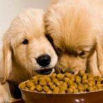 Las franquicias de alimentación para mascotas siguen creciendo en España