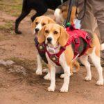La franquicia TerranovaCNC finaliza el año con nuevas acciones solidarias con los animales