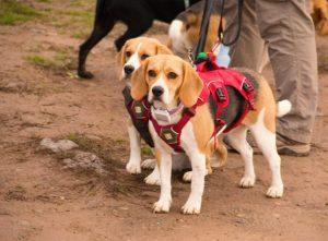 Franquicia Terranova CNC beagle